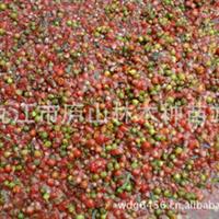 供应红豆杉种子_批发南方红豆杉种子_珍稀植物林木种子种子批发