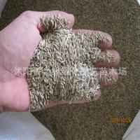 牧草种子多年生黑麦草种子鸡鸭鹅羊猪专用牧草种子
