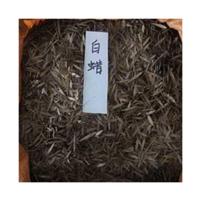 批发供应金叶白蜡白蜡种子木腊种子沭阳种子