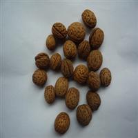 供应优质毛桃核种子桃树种子支持到付