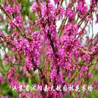 供花木-紫荆、迎春、迎夏、连翘、红叶李、冬青、黄杨等灌木