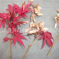 [大量供应]红枫种子种子批发花卉种子植物种子