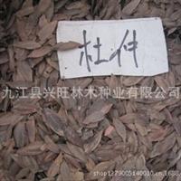 专业供应江西杜仲种子种子批发苗木种子全国较低价