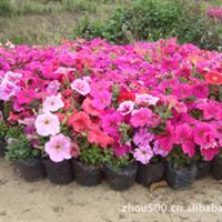 野花组合世界,让您美在自然,200个品种让您眼花缭乱
