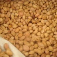 白皮松种子,五针松种子,金钱松种子,大阪松种子
