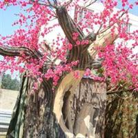 供应花木大花榆叶梅价格,多花红梅价格。灌木日本海棠基地