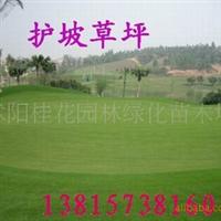 供应草种草籽四季青种子马蹄金种子三叶草种子台湾青草种