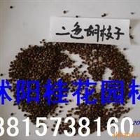 供应美人蕉种子黑松种子,爬山虎种子,黄栌种子,紫荆