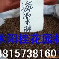 供应美人蕉种子,苦楝种子,鸟不沾种子,紫藤种子
