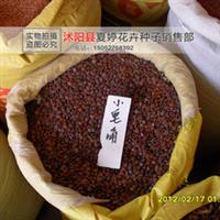 批发皂角种子小皂角种子新种子发芽率高