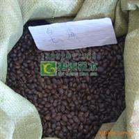 常年直销优质乔木种子皂角种子、皂荚种子,大皂角种子