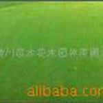 半边莲,白芨,白花三叶草,百合,薄荷,半支莲,八宝景天价格表