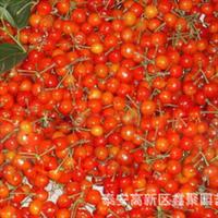 新鲜优质樱桃种子樱桃种子