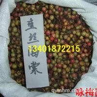 销售优质苗木种子--拐枣种子(图)