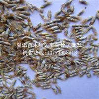 矢车菊种子批发蜜源植物种子可以货到付款矢车菊花种子