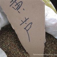 特价出售优质绿化苗木种子:红栌、黄栌、香椿种子