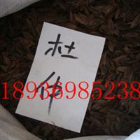 杜仲杜仲种子