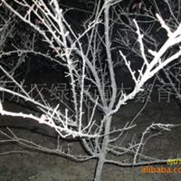 供应3--5公分从生榆叶梅、10分枝,分枝点20公分,每个分枝3公分