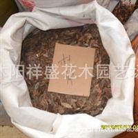 【种子公司】绿化种子批发杜仲种子保质保量支持货到付款