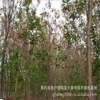 厂家供应优秀合欢树品种优良诚信出售
