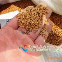 供应牡丹种子|低价批发牡丹种子|基地直销牡丹种子