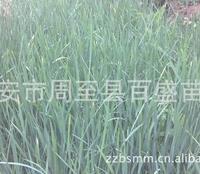 其它草坪种子