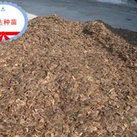 海南野生黄花梨种子---兴达苗木基地限量供应