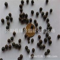 新采栾树种子黄山栾树种子北京栾种子新采种子包发芽货到付款