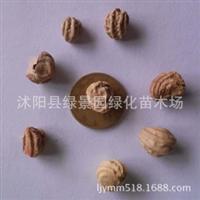 出售新采旱金莲种子新种子包发芽质量保证旱金莲种子货到付款