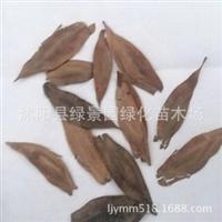 出售新采收药材种子杜仲种子、丝棉皮籽种、胶树新种子包发芽