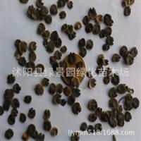 出售新采草花种子蜀葵种子新种子包发芽包质量可货到付款