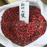红叶小檗种子、(图)