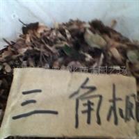 三角枫种子、无患子种子、银杏种子、水杉种子、火炬种子