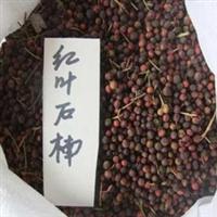 【特价@@】低价出售优质红叶石楠种子价格优惠