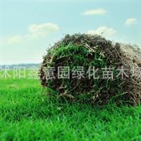批发进口草坪种子黑麦草高羊茅四季青草种子白三叶种子