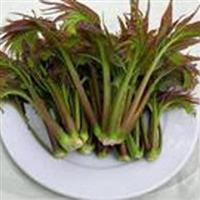 红油香椿种子小院种香椿室内盆栽蔬菜种子春播