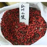 新采彩叶花卉种子苗木种子红叶小檗种子紫叶小檗种子