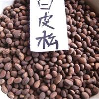 供应优质白皮松种子保证质量量大批发