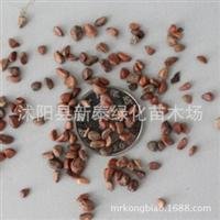 批发供应优质月季花种子藤本月季种子月季花种子各种品种
