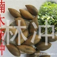 金丝楠木种子楠树桢楠种子豆瓣楠香楠龙胆楠保证质量