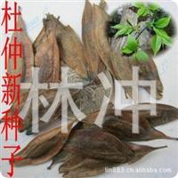 中药材种子杜仲种子提供种植技术包发芽