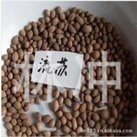 新采林木种子流苏树种子190元一斤