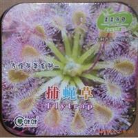 盒装神奇古怪草系列捕蝇草种子迷你彩盒+营养土+种子