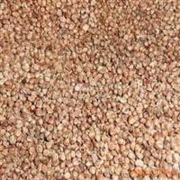 批发优质桧柏种子保质保量