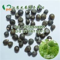 厂家直销优质文冠果种子花木种子苗木种子芽率高