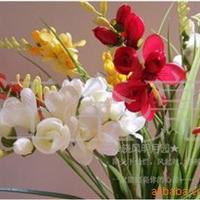 【苗圃直销】香雪兰苗种子当年新采保质保量支持货到付款