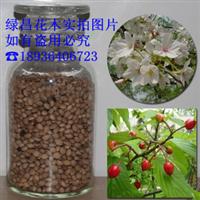 批发优质山樱花种子山樱桃种子嫁接樱花提供种植技术
