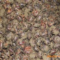 广西桂林荔浦马蹄是有名的马蹄