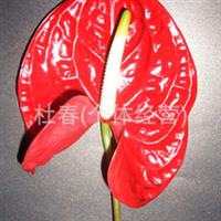 鲜花切花花卉鲜花批发鲜切花批发配花红掌