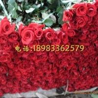 供应鲜花玫瑰花红玫瑰白玫瑰黄玫瑰切花
